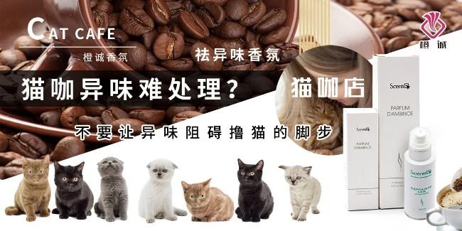 猫咖异味难处理?不要让异味阻碍撸猫的脚步—橙诚猫咖店香氛