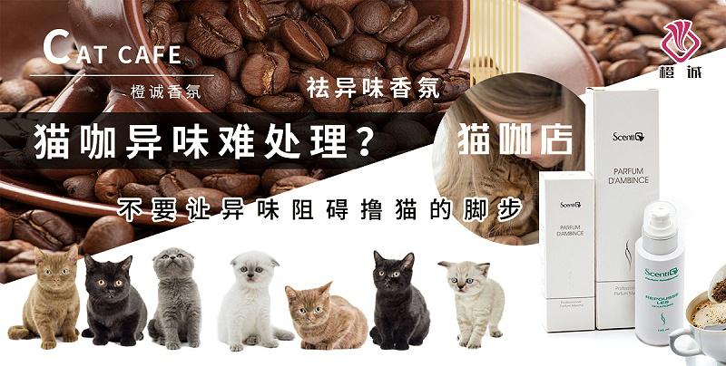 猫咖店香氛
