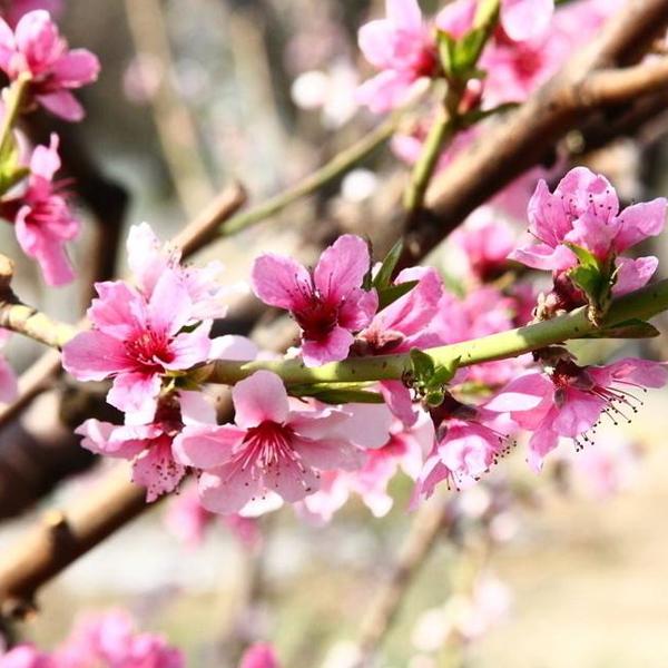 春日寄语香氛精油.jpg