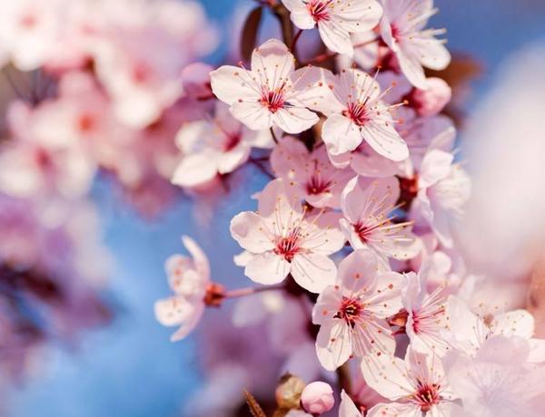 春日寄语香氛精油