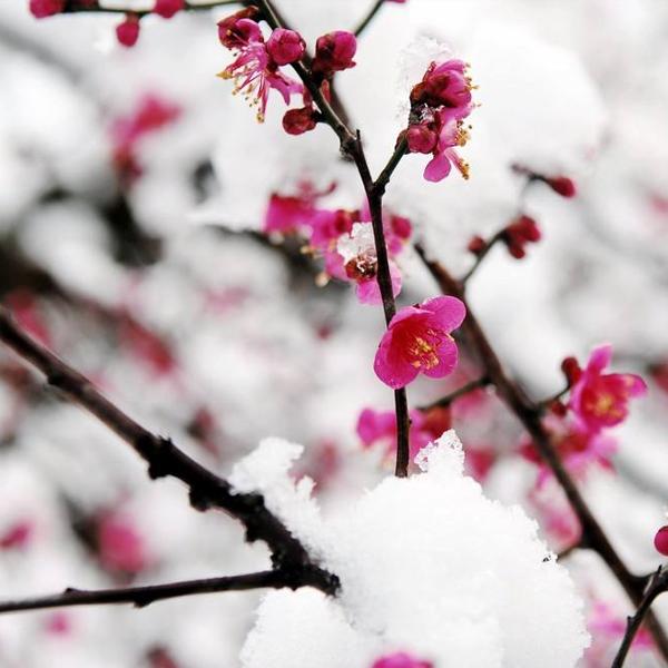 冬日恋歌香氛精油